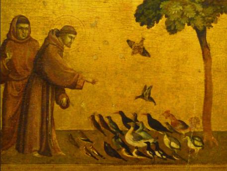 Assisi_birds